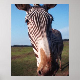 zebra 2 poster