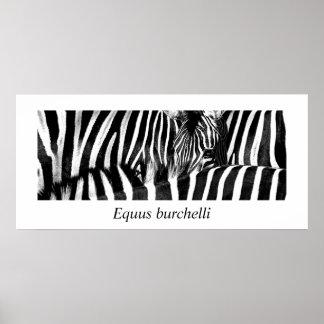 Zebra #2-Poster Poster