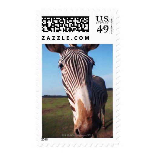 zebra 2 stamps
