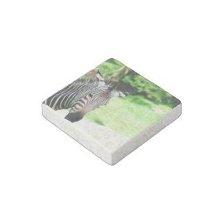 zebra-56.jpg imán de piedra