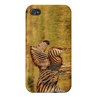 Zebra and baby foal photography iPhone 4 cases