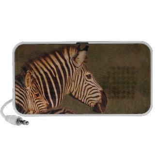 Zebra and baby mp3 speakers