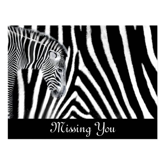 Zebra and it's stripe postcard