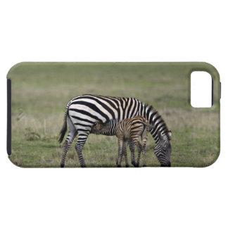 Zebra and nursing foal, Tanzania iPhone SE/5/5s Case