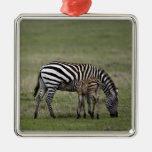 Zebra and nursing foal, Tanzania Christmas Tree Ornaments