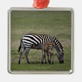 Zebra and nursing foal, Tanzania Square Metal Christmas Ornament