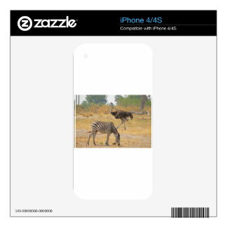 Zebra and Ostrich TomWurl.jpg iPhone 4S Skin