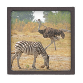 Zebra and Ostrich TomWurl.jpg Keepsake Box