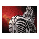 Zebra and Oxpecker Post Cards