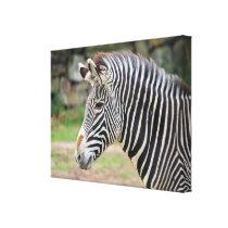 Zebra animal canvas print