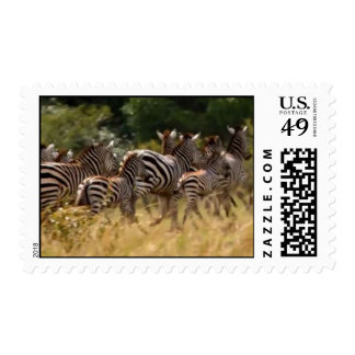 Zebra Animal Migration Postage Stamps