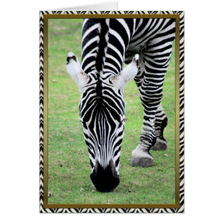 Zebra-any occasion card