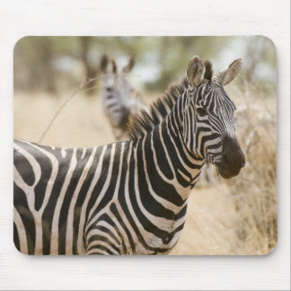 Zebra at the Meru National Park, Kenya. Mouse Pad
