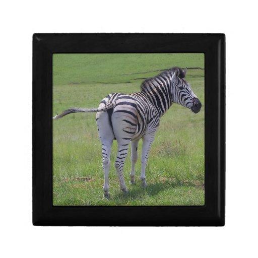 Zebra Attitude  Gift Box