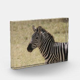 zebra awards