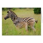 Zebra baby and mom card