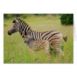 Zebra baby and mom greeting card