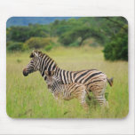 Zebra baby and mom mouse pads