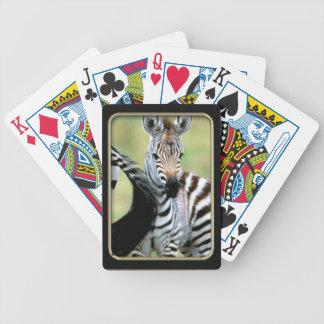 Zebra Baby  Photo Art Playing Cards