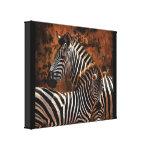 Zebra baby wild animals Africa series wrappedcanvas
