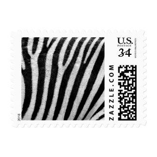 Zebra Black and White Striped Skin Texture Templat Stamps
