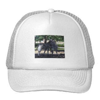 Zebra Buds Hat