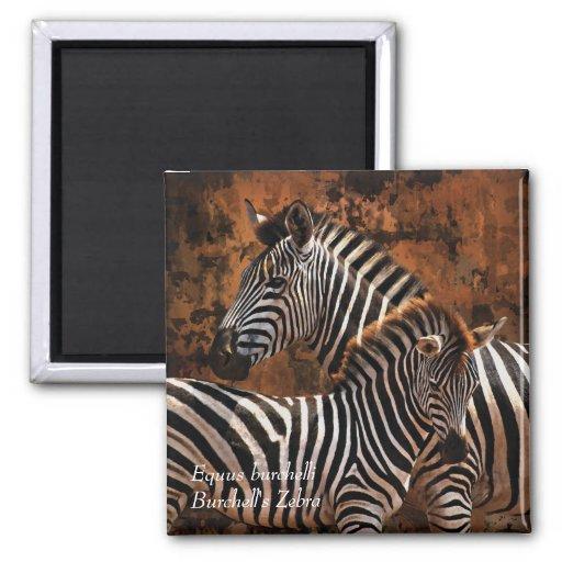 Zebra Burchell's Equus burchelli Magnets