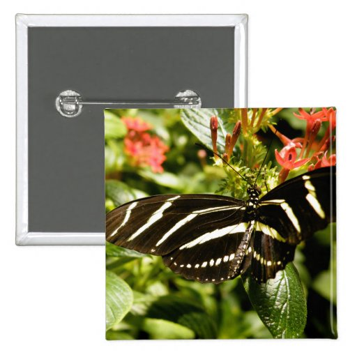 Zebra Butterfly 2 Inch Square Button