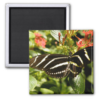 Zebra Butterfly 2 Inch Square Magnet