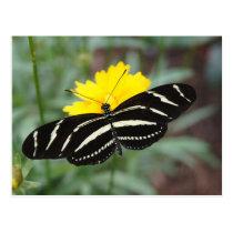 Zebra Butterfly Beauty II Postcard
