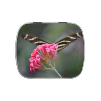 zebra butterfly behind pink florida flower jelly belly candy tin