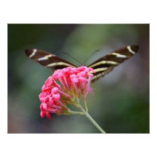 zebra butterfly behind pink florida flower custom flyer