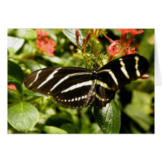 Zebra Butterfly Card