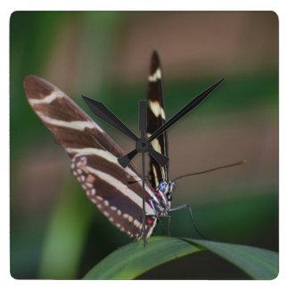 Zebra Butterfly Clocks