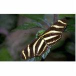 Zebra butterfly, Costa Rica Photo Sculptures