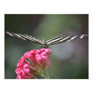 zebra butterfly head on pink flower animal personalized flyer