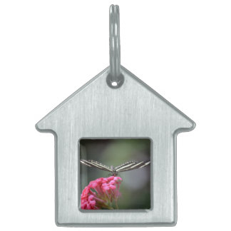 zebra butterfly head on pink flower animal pet name tag