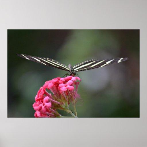 zebra butterfly head on pink flower animal print