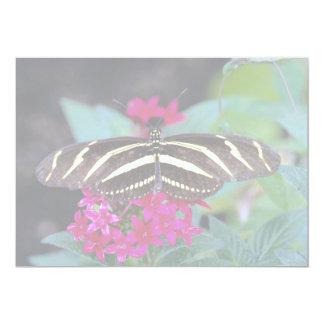 Zebra butterfly, Heliconius charitonius 5x7 Paper Invitation Card
