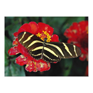 Zebra butterfly, Heliconius charitonius  flowers 5x7 Paper Invitation Card
