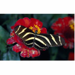 Zebra butterfly, Heliconius charitonius Acrylic Cut Outs