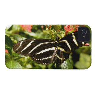 Zebra Butterfly iPhone 4 Case-Mate Cases