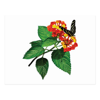 Zebra Butterfly on Lantana Postcard
