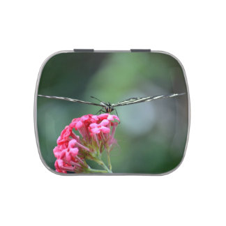 zebra butterfly thin wings pink flower jelly belly tins