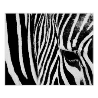 Zebra by tdgallery poster