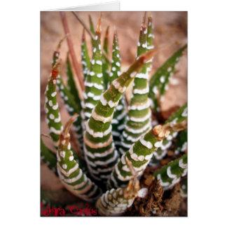 Zebra Cactus Card