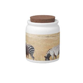 Zebra Candy Jar