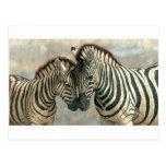 zebra-clip-art-3 postcard