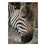 Zebra, close-up greeting card