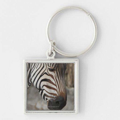 Zebra, close-up keychain